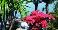 Blütenpracht Gardasee©Dietmar Guth Fotolia