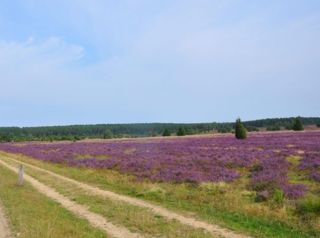 Lüneburger Heide ©weiss reisen