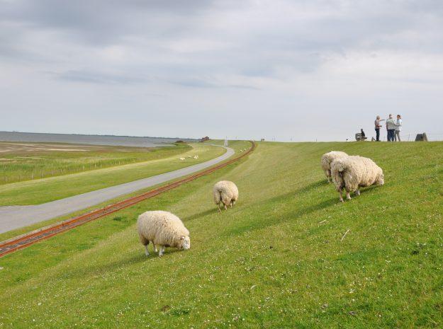 Nordsee 22©Weiss Reisen