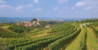 Piemont_Langhe 3©travelpeter - Fotolia