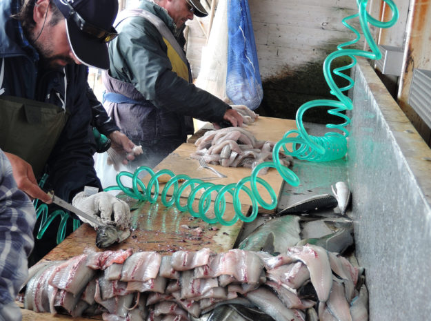 Fischerreise Hitra 12©Weiss Reisen