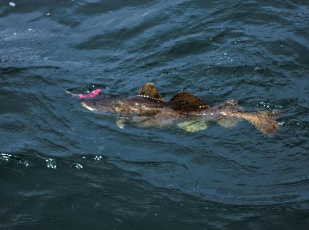 Fischerreise Hitra 15©Weiss Reisen
