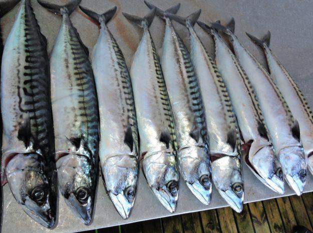 Fischerreise Hitra 64©Weiss Reisen