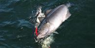 Fischerreise Hitra 2©Weiss Reisen