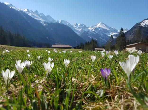Frühling_im_Stillachtal©Tourismus Oberstdorf